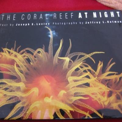 The Coral Reef at Night (Hardcover) - thumb