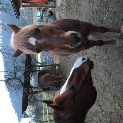 Mitreiterin/Pferdeführerin für die Hippotherapie - thumb