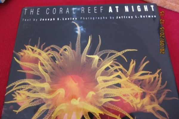 The Coral Reef at Night (Hardcover)