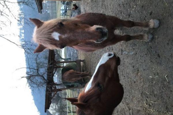 Mitreiterin/Pferdeführerin für die Hippotherapie