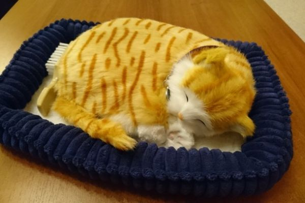 Perfekt Petzzz, lebensechte Katze, EUR 25